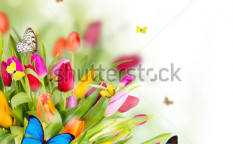 Stock-photo--beautiful-spring-flowers-with-butterflies-121068337