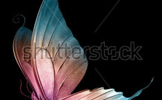 Stock-photo-a-beautiful-butterfly-in-d-809946