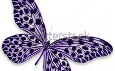 Stock-photo-black-and-purple-butterfly-isolated-on-white-background-121482397