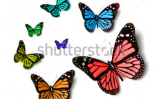 Stock-photo-butterfly-70751140