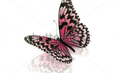 Stock-photo-butterfly-73302994