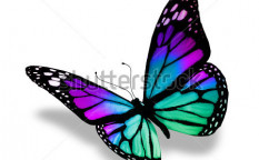 Stock-photo-butterfly-isolated-on-white-background-114428965