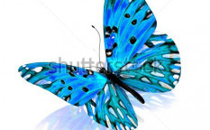 Stock-photo-butterfly-isolated-on-white-background-95840926