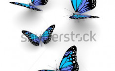 Stock-photo-butterfly-isolated-on-white-d-illustration-114571138