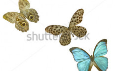 Stock-photo-butterfly-on-white-124174822