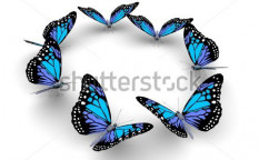 Stock-photo-butterflys-isolated-on-white-d-illustration-114256660