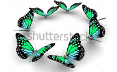Stock-photo-butterflys-isolated-on-white-d-illustration-115456348