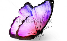 Stock-photo-color-butterfly-isolated-on-white-124391572