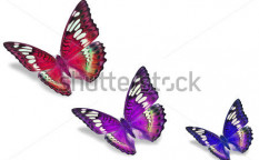 Stock-photo-colorful-butterflies-129649814