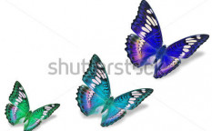 Stock-photo-colorful-butterflies-129649820
