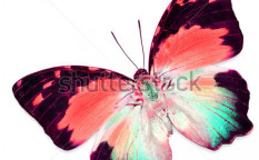 Stock-photo-colorful-butterfly-isolated-on-white-background-123560338