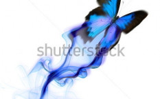 Stock-photo-exotic-butterfly-design-73067686