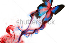 Stock-photo-exotic-butterfly-design-a-74036944