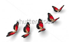 Stock-photo-five-butterflies-isolated-on-white-d-illustration-87417884
