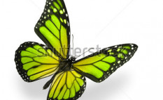 Stock-photo-green-color-enhanced-butterfly-isolated-on-white-soft-shadow-underneath-45434098
