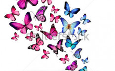 Stock-photo-many-different-butterflies-isolated-on-white-background-122558071