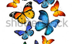 Stock-photo-many-different-butterflies-isolated-on-white-background-125388689