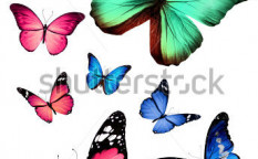 Stock-photo-many-different-butterflies-isolated-on-white-background-127876883