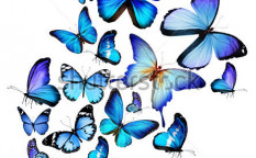 Stock-photo-many-different-butterflies-isolated-on-white-background-129128843