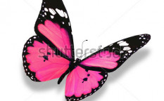 Stock-photo-pink-butterfly-isolated-on-white-94396807