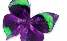 Stock-photo-purple-and-green-butterfly-isolated-on-white-background-123560344