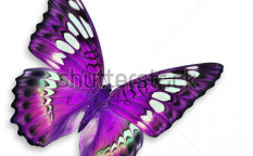 Stock-photo-purple-butterfly-isolated-on-white-background-119354467