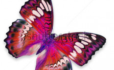 Stock-photo-red-butterfly-flying-114025525