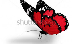 Stock-photo-red-butterfly-isolated-on-white-108124808