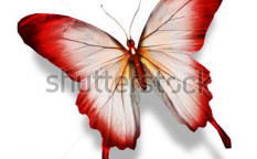Stock-photo-red-butterfly-isolated-on-white-123120784