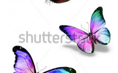 Stock-photo-three-color-butterflies-isolated-on-white-127854788