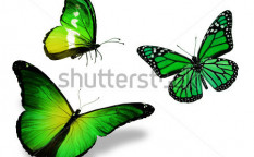 Stock-photo-three-green-butterfly-isolated-on-white-background-128143064