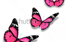 Stock-photo-three-pink-butterflies-isolated-on-white-94897243