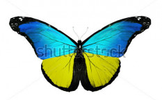 Stock-photo-ukraine-flag-butterfly-isolated-on-white-background-121453675