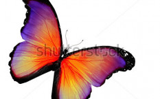 Stock-photo-violet-yellow-butterfly-on-white-background-117513880