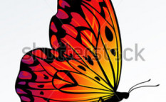 Stock-vector-beautiful-fire-colored-butterfly-on-reflecting-surface-7555693