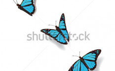 Stock-vector-butterfly-in-motion-33607660