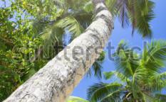 Stock-photo-green-forest-sun-light-through-treetops-summer-118746034
