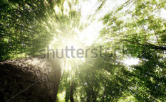 Stock-photo-green-forest-tree-with-green-leaves-bottom-view-background-113076097