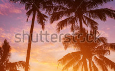 Stock-photo-palm-trees-on-the-background-of-a-beautiful-sunset-110612093