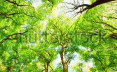 Stock-photo-tree-canopy-47359726