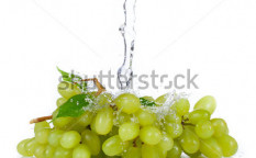 Stock-photo-grapes-of-white-wine-with-water-splash-isolated-on-white-background-129352367