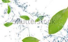 Stock-photo-green-leaves-in-motion-80346784