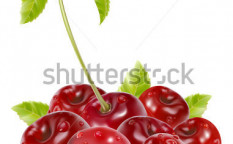 Stock-vector-photo-realistic-vector-ripe-cherries-with-water-drops-and-leaves-52202692