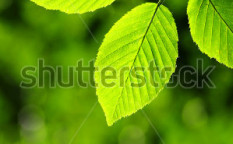 Stock-photo--leaves-40489567