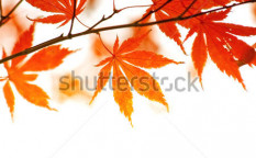 Stock-photo-autumn-foliage-38910064