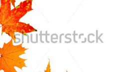 Stock-photo-autumn-maple-leaf-frame-for-a-postal-on-a-white-background-22754665