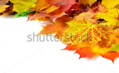 Stock-photo-autumn-maple-leafs-93592666