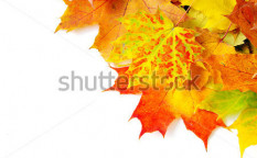 Stock-photo-autumn-maple-leafs-isolated-on-a-white-115486081