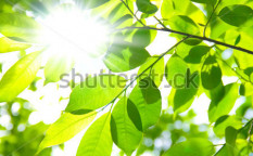 Stock-photo-background-of-fresh-green-leaves-91777007