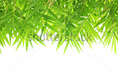 Stock-photo-bamboo-leaves-background-128283221